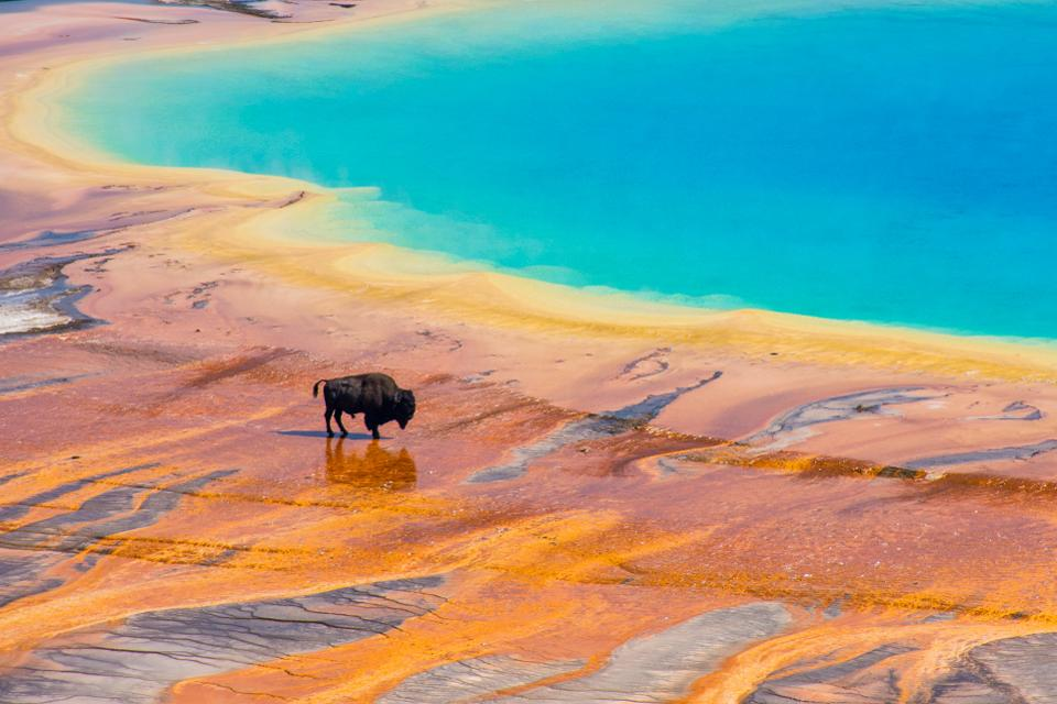 Another Scary Rumor About Yellowstone Has Appeared. Here's What You Need to Know