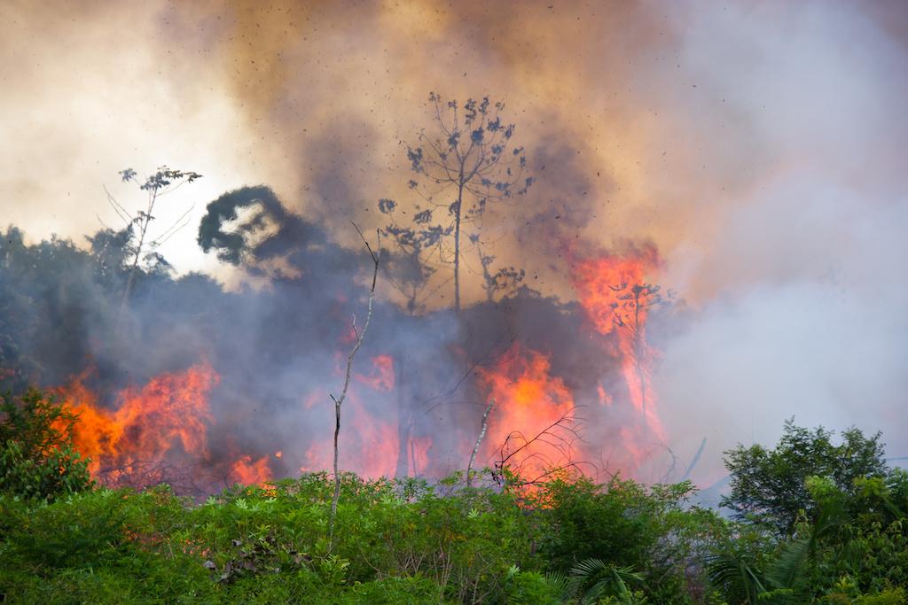 Amazon Rainforest Fires Spike Carbon Monoxide Emissions