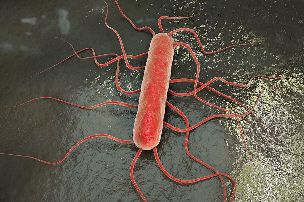 Listeriosis Infections Are Not Common, But Can Be Deadly