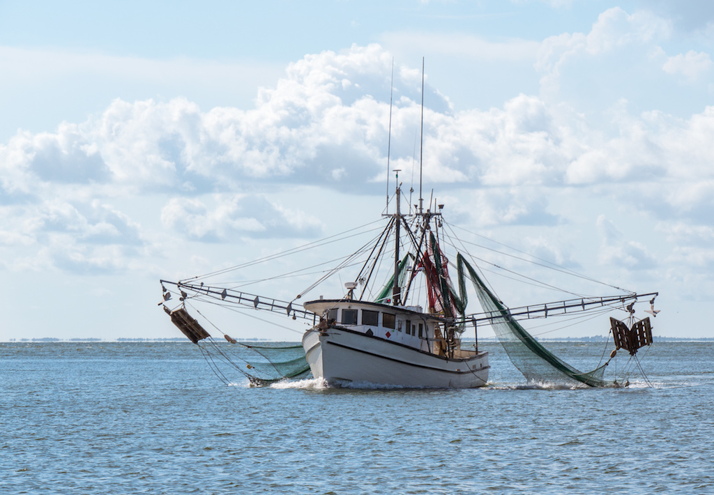 Growing Dead Zone Imperils Gulf of Mexico Shrimp Industry