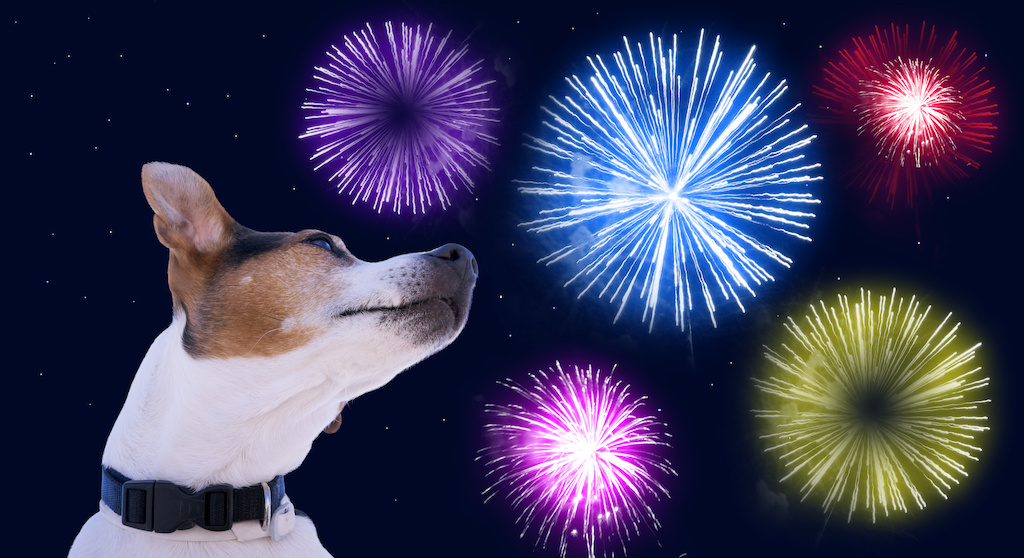 Remember pets and safety when using fireworks