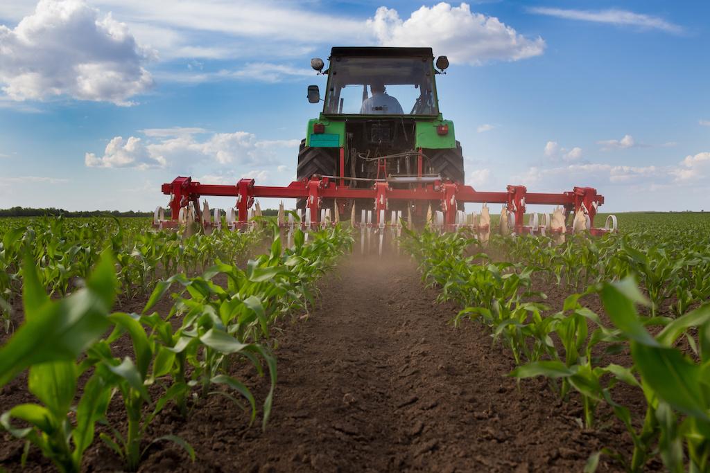 How Cropland Fertilization Enhanced Global Food Security