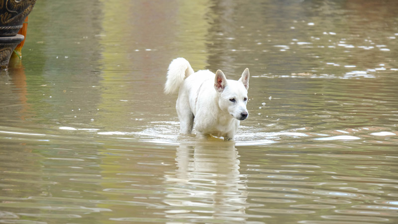 When Disaster Nears, What Happens to Your Pets?