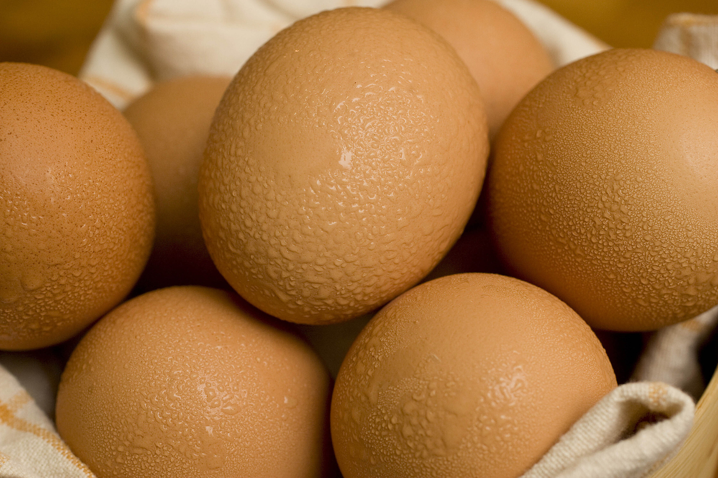 Food Poisoning Linked to Hard-Boiled Eggs in Food Service