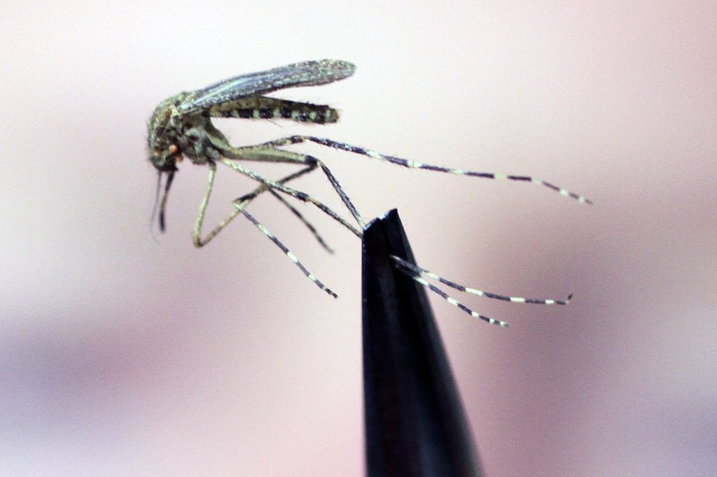 Dry summer brings blessed relief from biting insects