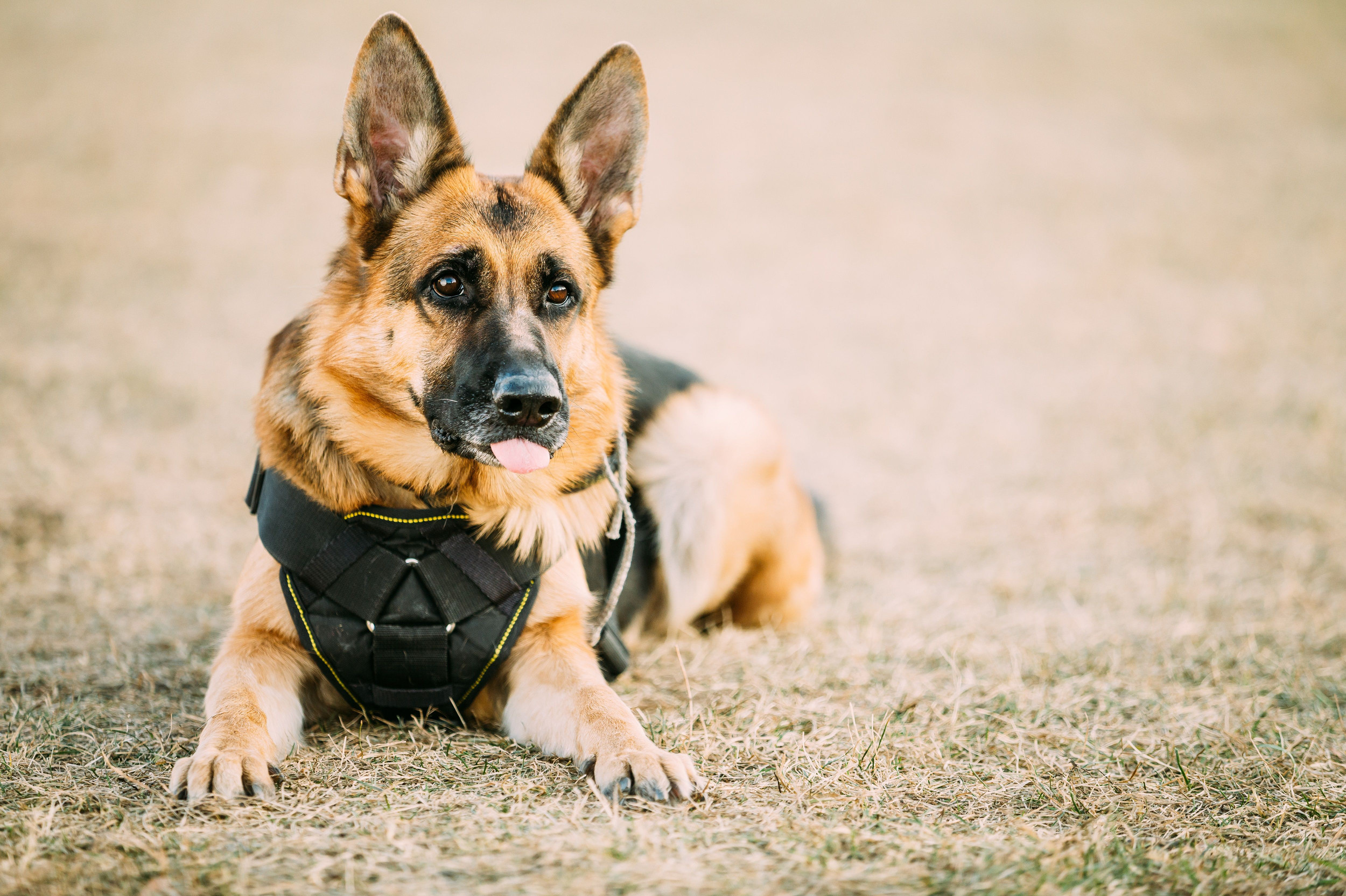 Texas congressman introduces bill to care for military and law enforcement dogs