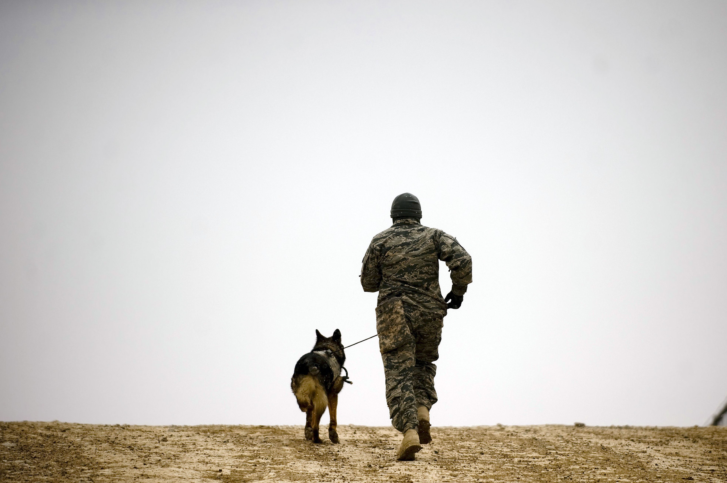 Military working dogs show off in honor of new stamp
