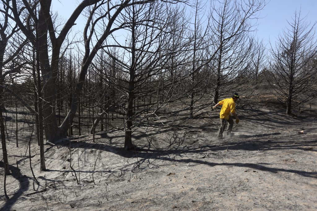 Study: Trees In Kansas Increasingly Pose A Wildfire Hazard