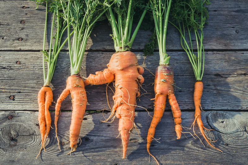 Ugly Produce and the Reverse Logistics Supply Chain